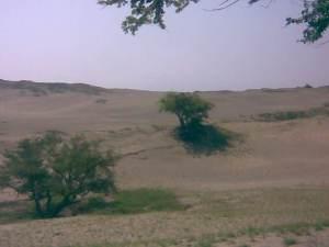 Image334